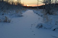 Salida del sol durante el invierno congelado por un río del bosque cubierto con nieve Imagen de archivo libre de regalías