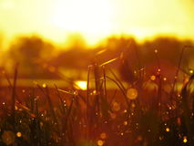 Salida del sol e hierba con rocío chispeante Fotos de archivo libres de regalías