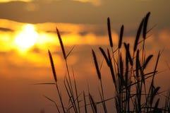 Salida del sol e hierba en moring Fotografía de archivo libre de regalías