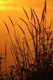 Salida del sol e hierba en moring Fotografía de archivo