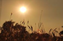 Salida del sol e hierba en moring Imágenes de archivo libres de regalías