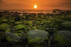 ¡Salida del sol en alga marina! Foto de archivo libre de regalías