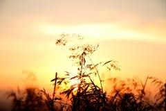 Salida del sol en Bieszczady Imágenes de archivo libres de regalías