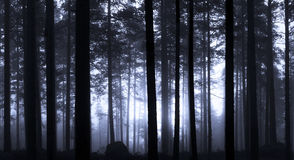 Salida del sol en bosque brumoso Fotos de archivo