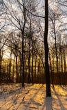 Salida del sol en bosque del invierno imagen de archivo