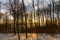 Salida del sol en bosque del invierno fotografía de archivo