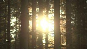 Salida del sol en el bosque almacen de video