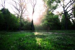 Salida del sol en el bosque Imagenes de archivo