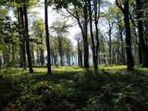 Salida del sol en el bosque Fotos de archivo