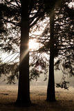 Salida del sol en el bosque Fotos de archivo libres de regalías