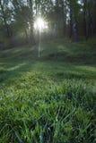 Salida del sol en el bosque de la primavera Imagen de archivo libre de regalías