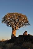 Salida del sol en el bosque del árbol de la aljaba, Namibia Fotos de archivo libres de regalías