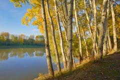 Salida del sol en el bosque del otoño Imagen de archivo libre de regalías