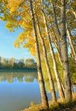 Salida del sol en el bosque del otoño Fotos de archivo