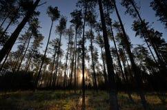 Salida del sol en el bosque en Drawskie Lakeland (Polonia) Imagen de archivo libre de regalías