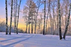 Salida del sol en el bosque del invierno Imagen de archivo libre de regalías