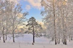 Salida del sol en el bosque del invierno Foto de archivo