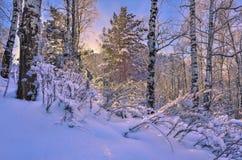 Salida del sol en el bosque del invierno Imágenes de archivo libres de regalías