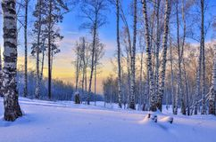 Salida del sol en el bosque del invierno Foto de archivo libre de regalías