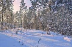 Salida del sol en el bosque del invierno Imagen de archivo
