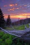 Salida del sol en el bosque muerto Foto de archivo