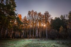 Salida del sol en el bosque Siberia, Rusia del otoño Imagen de archivo libre de regalías