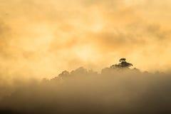 Salida del sol en el bosque tropical de niebla Fotografía de archivo
