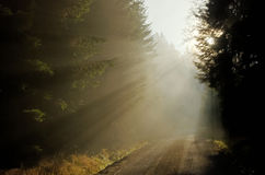Salida del sol en el camino forestal foto de archivo libre de regalías