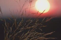 Salida del sol en el campo Foto de archivo libre de regalías
