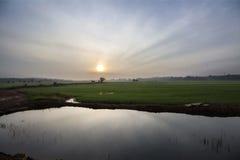 Salida del sol en el campo de arroz fotografía de archivo
