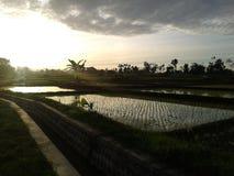 Salida del sol en el campo del arroz Fotos de archivo