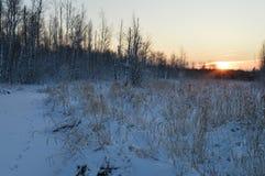 Salida del sol en el cielo claro despejado sobre el bosque de la nieve del invierno Imagen de archivo