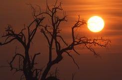 Salida del sol en el invierno Foto de archivo