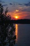 Salida del sol en el lago del bosque con el álamo temblón en el primero plano. Foto de archivo libre de regalías