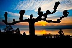 Salida del sol en el lago Ginebra, Suiza fotografía de archivo
