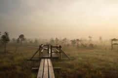 Salida del sol en el pantano Imagen de archivo libre de regalías