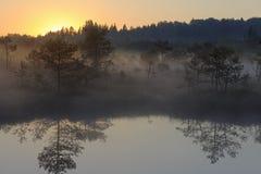 Salida del sol en el pantano brumoso fotografía de archivo