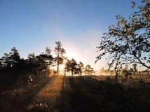 Salida del sol en el pantano, Lituania Fotografía de archivo