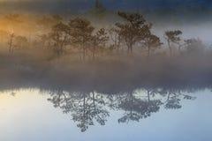 Salida del sol en el pantano, pantano fotos de archivo