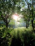 Salida del sol en el parque de la ciudad fotos de archivo