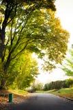 Salida del sol en el parque del otoño Imágenes de archivo libres de regalías