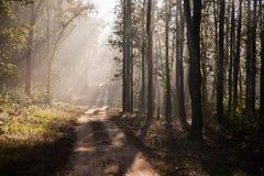 Salida del sol en el parque nacional de Kanha, la India Foto de archivo