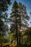 Salida del sol en el parque nacional de Yosemite Fotografía de archivo