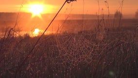 Salida del sol en el prado almacen de metraje de vídeo