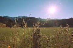 Salida del sol en el prado en Nueva Zelandia Imagen de archivo