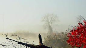 Salida del sol en el río durante el último otoño, niebla metrajes