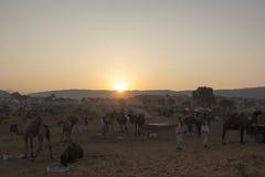 Salida del sol en el safari del camello Fotos de archivo
