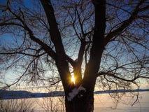 Salida del sol en invierno en una opinión del lago a través de un árbol Imagen de archivo libre de regalías