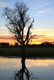 Salida del sol en Kakadu con el águila Cuña-atada Imagenes de archivo