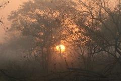 Salida del sol en Kruger Foto de archivo